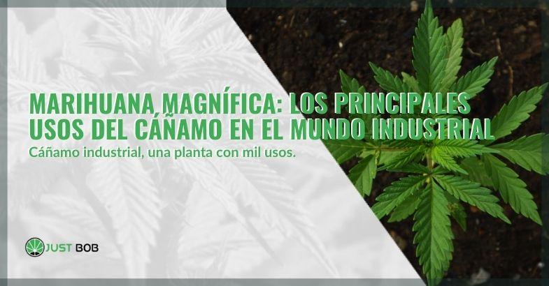 Marihuana magnífica: los principales usos del cáñamo en el mundo industrial