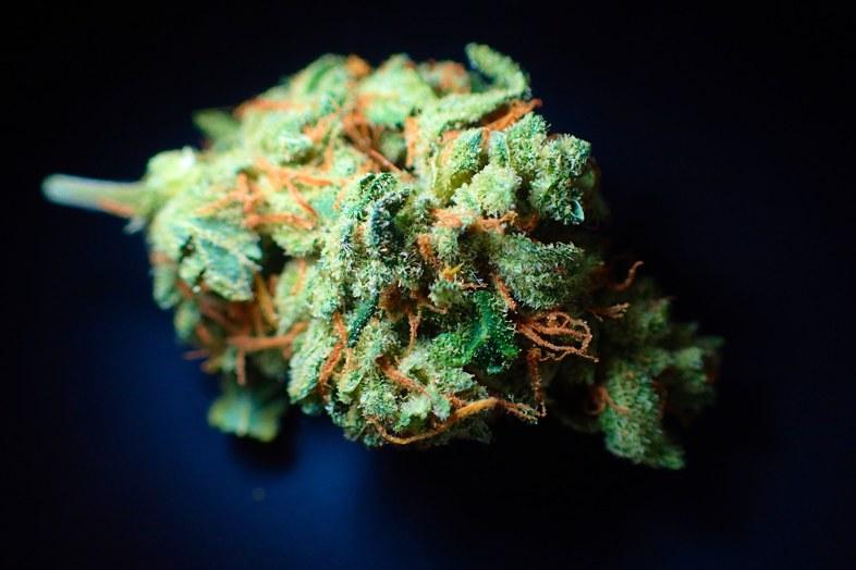 Por que elegir resina de marihuana legal