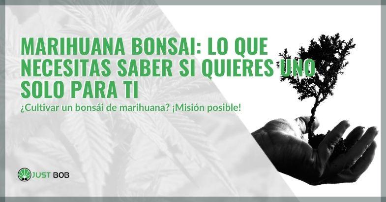 Marihuana bonsai: lo que necesitas saber si quieres uno solo para ti