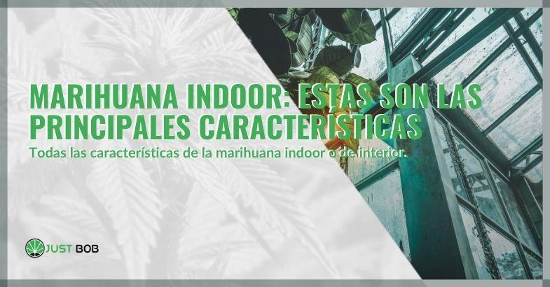 Marihuana indoor: estas son las principales características