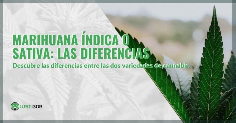 Diferencias entre marihuana índica y sativa
