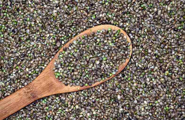 Cómo elegir las semillas de cáñamo de mejor calidad