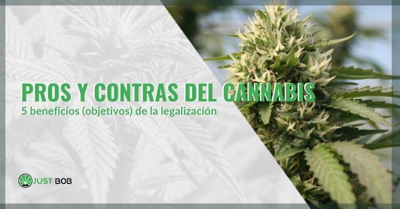 Pros y contras de legalizar el cannabis en España