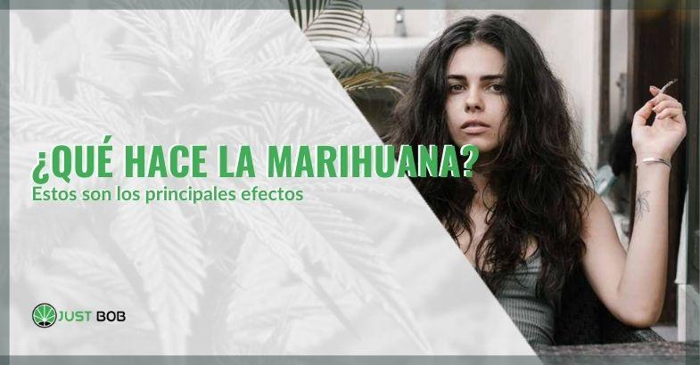 Veamos qué efectos causa la marihuana