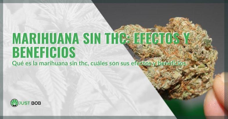 Efectos y beneficios de la marihuana sin THC