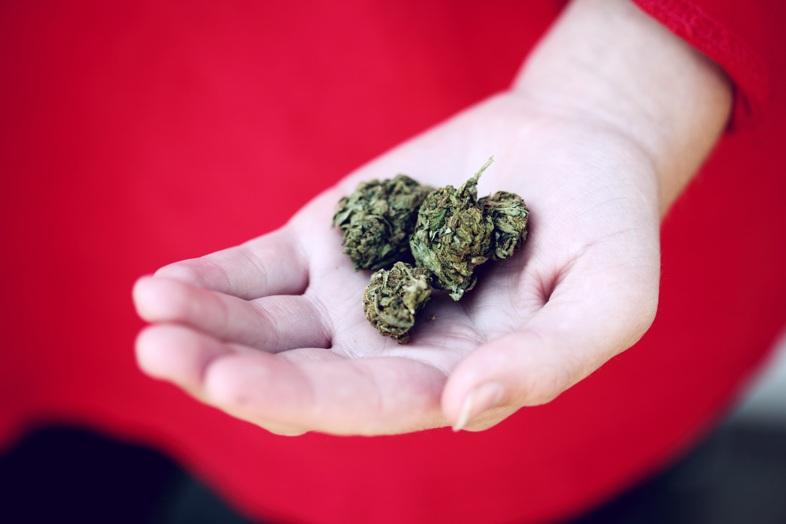 ¿En qué consiste el secado de marihuana?