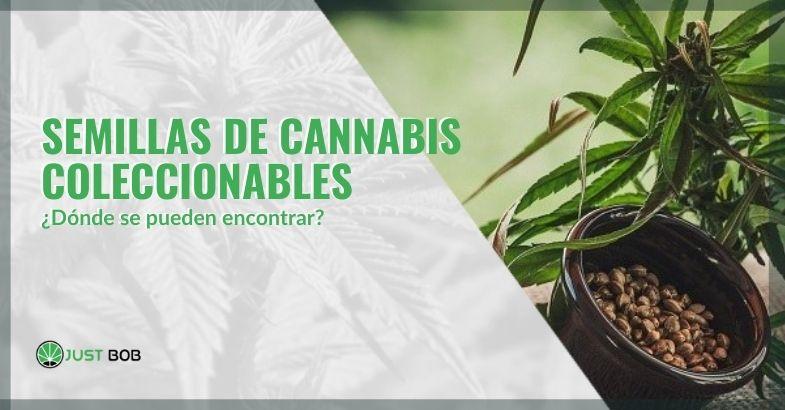 Semillas de marihuana coleccionables: ¿dónde se pueden encontrar?