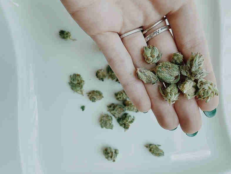 El cannabis legal y los beneficios que aportaría a los países donde es legal