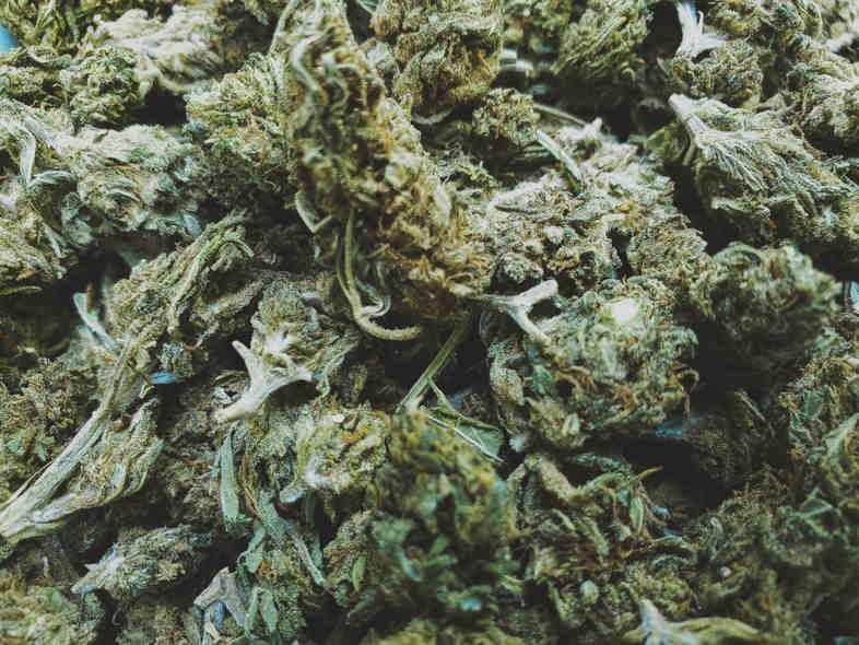 Gracias a la nueva normativa, en 2021 podrás comprar marihuana online