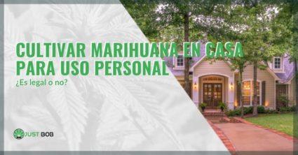 ¿Es legal cultivar marihuana en casa para uso personal?
