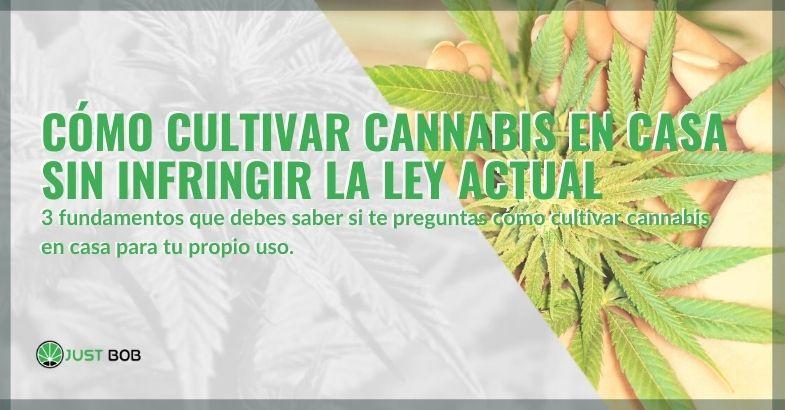 ¿Cómo se puede cultivar marihuana en casa sin infringir la ley?