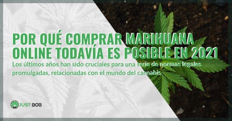 Gracias a la normativa promulgada en los últimos años, en 2021 es posible comprar marihuana online