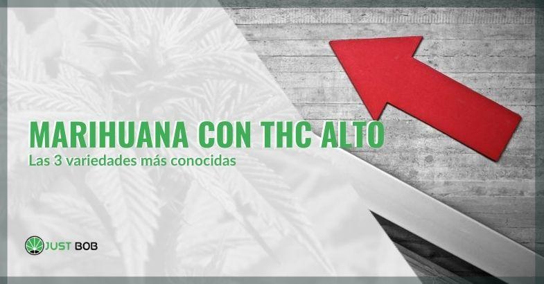 Tres variedades de marihuana con alto contenido de THC
