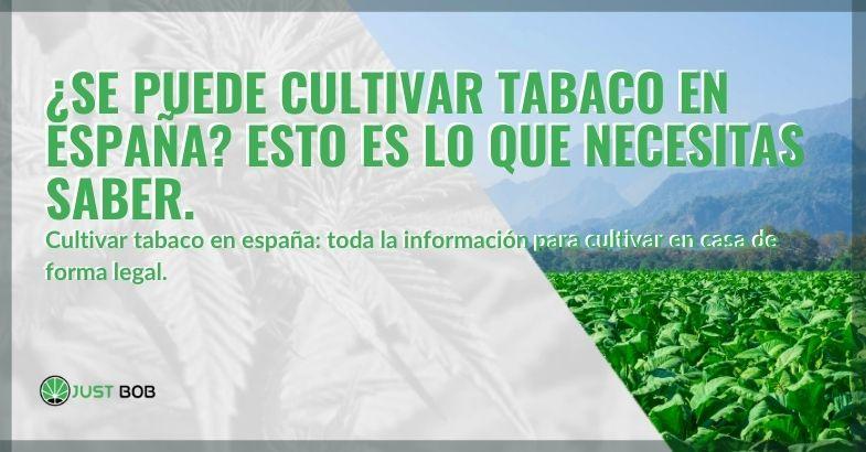 ¿Es posible cultivar tabaco en España?