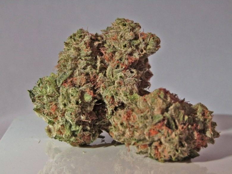 Master Kush es una de las mejores marihuana ligera