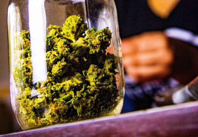 Marihuana con thc para uso terapéutico