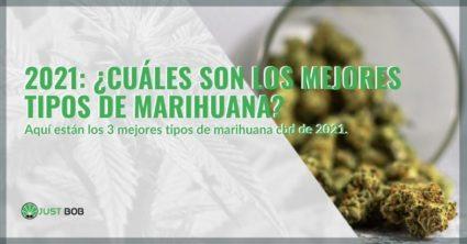 ¿Cuáles son los mejores tipos de marihuana en 2021?