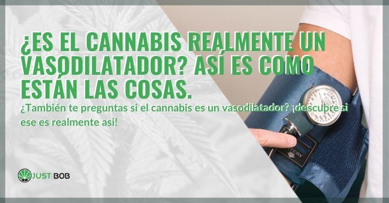¿Es el cannabis realmente un vasodilatador?