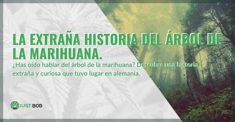 Árbol de marihuana: la extraña historia