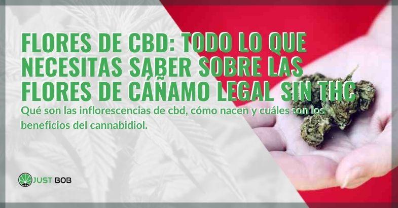 Flores de CBD: todo sobre las flores de cannabis legal sin THC