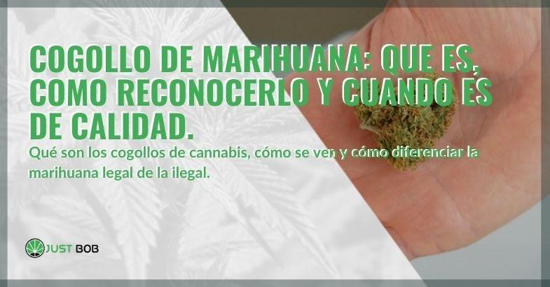 Comprender qué son los cogollos de marihuana y reconocer los de calidad