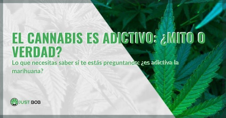 ¿Es un engaño o la verdad que la marihuana es adictiva?