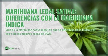 Las mejores variedades legales de cannabis Sativa de 2021 y las diferencias con el cannabis Indica
