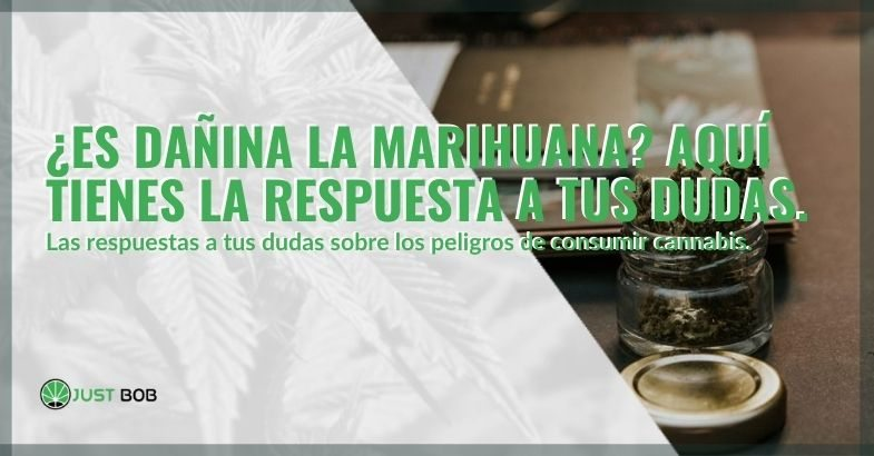 ¿Es malo tomar marihuana? Esta es la respuesta.