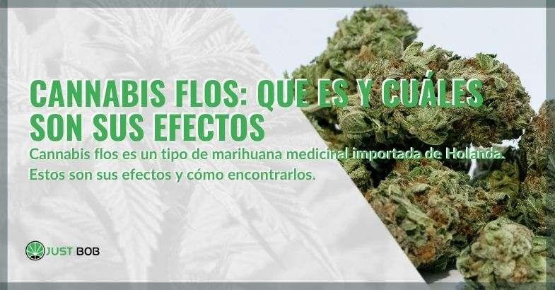 ¿Qué es el cannabis Flos y cuáles son sus efectos?