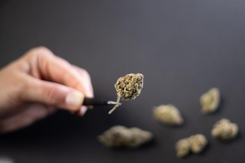 Flores de cannabis secas