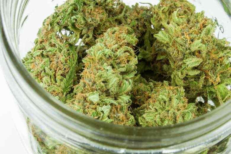 Flos de cannabis: o flores secas de marihuana medicinal