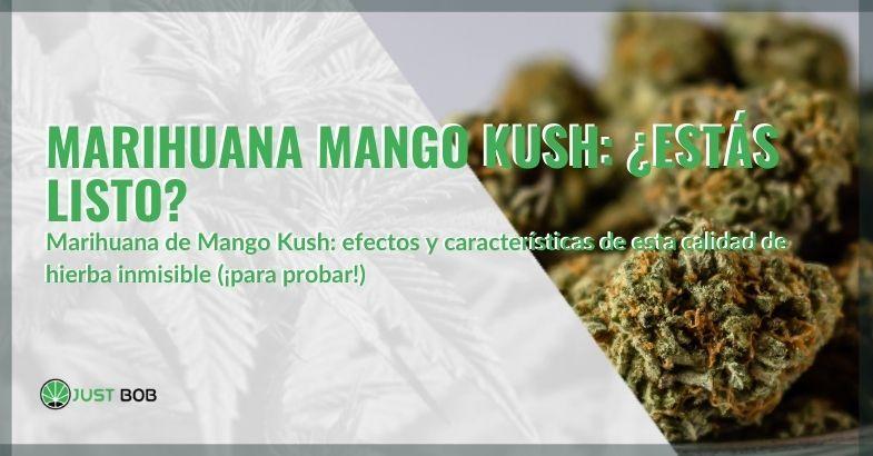 Características y efectos de la marihuana Mango Kush