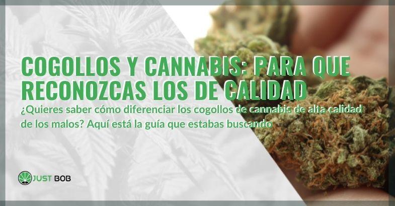 Guía para reconocer la calidad de los cogollos de cannabis
