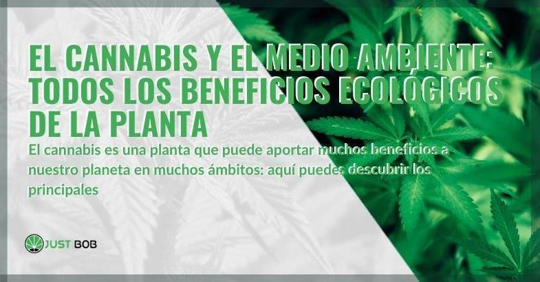 El cáñamo y los principales beneficios ecológicos.