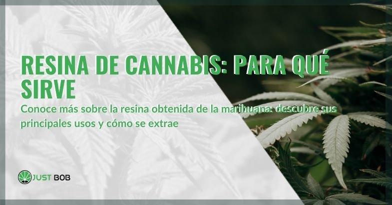 Los principales usos de la resina de cannabis